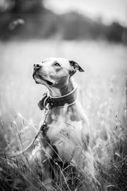 Hundporträtt_fotografistockholm_Stockholm_hundfotograf_fotograf_hund