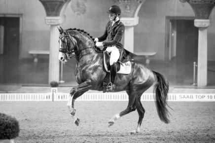 Daniel Bachmann Andersen & Blue Horse Don Olymbrio-4